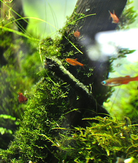 Natural Aquatic World Tropical Fish Aquariums And Aquascaping Shop
